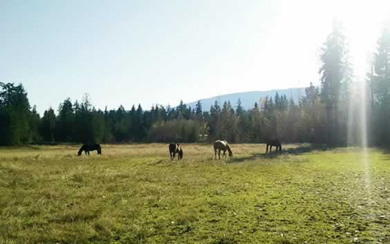 Horses Enjoying a Nice Day
