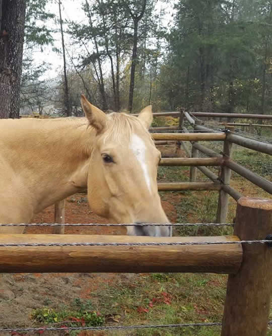 Single Horse Boarded at JJ's Place