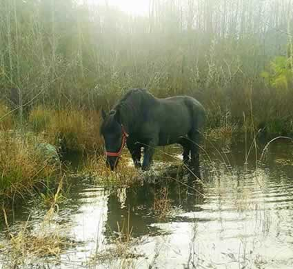 Horse in Pond