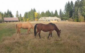 Horses at JJs Place