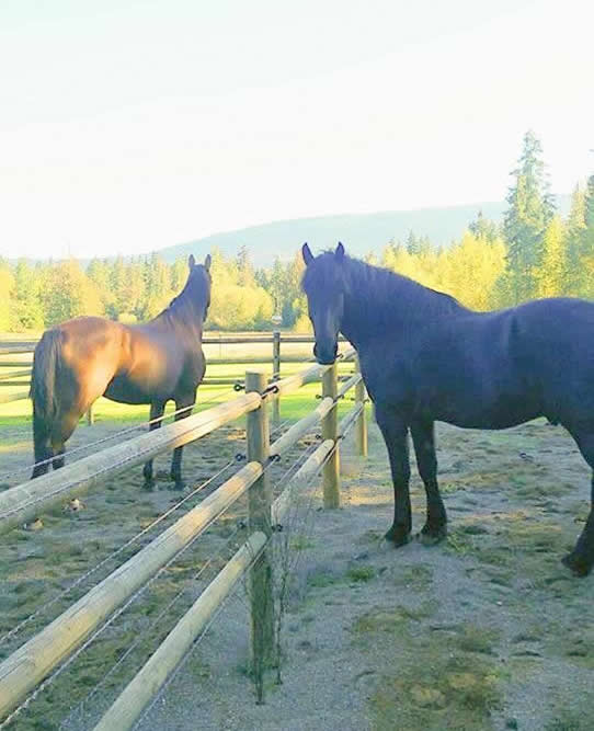 Injured Horses Recovering at JJ's Place