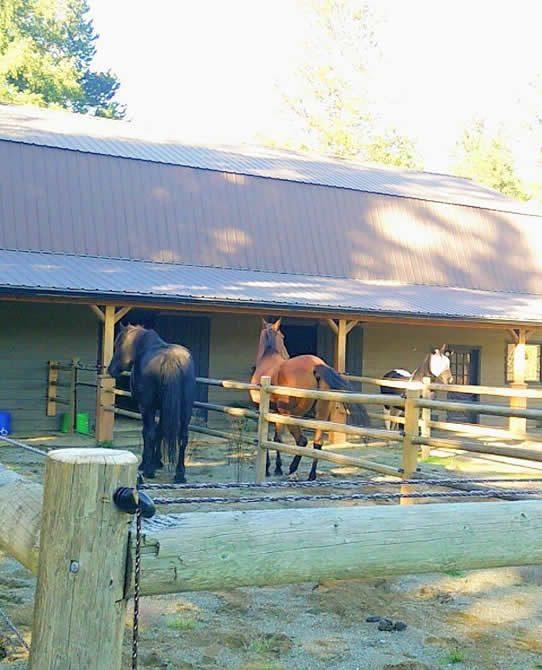 Three Horses Undergoing Rehab